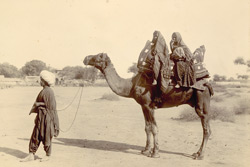 Sindhi women on a camel.